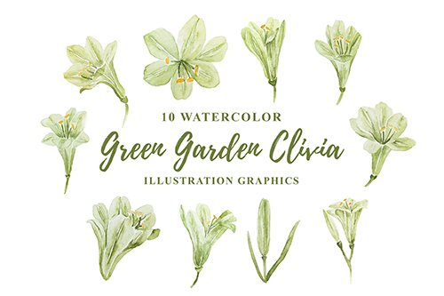 10 Watercolor Green Garden Clivia Illustration