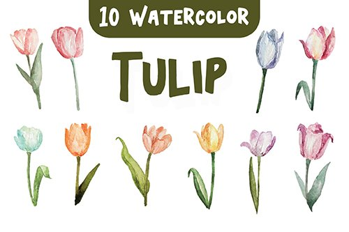 10 Watercolor Tulip Flower Illustration Graphics