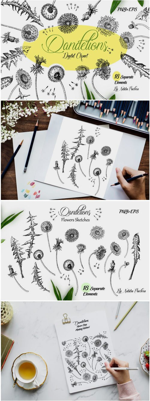 Dandelions Sketches Clipart 1562663
