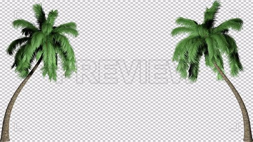 MA - Two Palm Trees Effect Background 221982