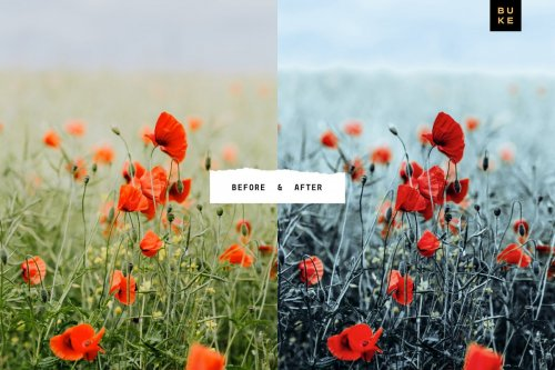 CreativeMarket - 5 Cool Blush Lightroom Presets Pack 4001769