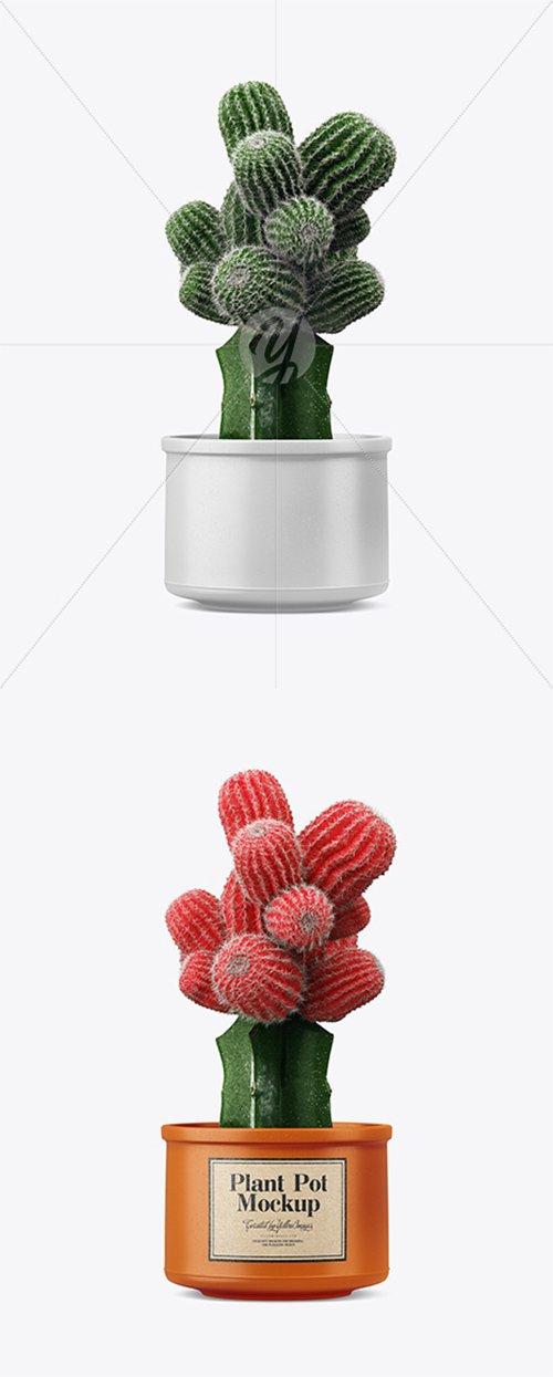 Cactus in Ceramic Pot Mockup 35072 TIF