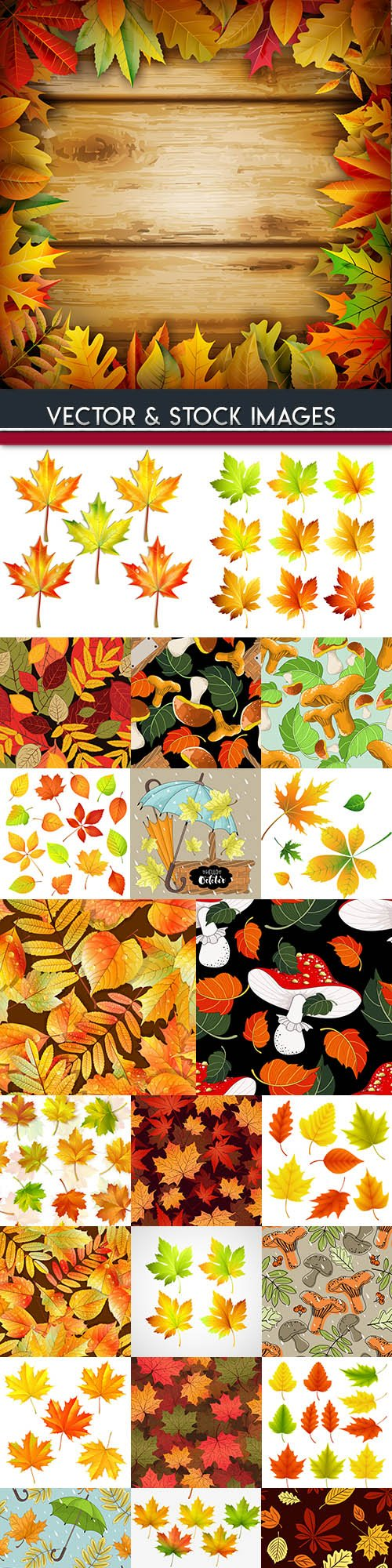 Autumn leaves and mushrooms background colourful