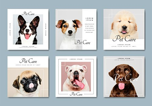 Pet care banner template collection 845709