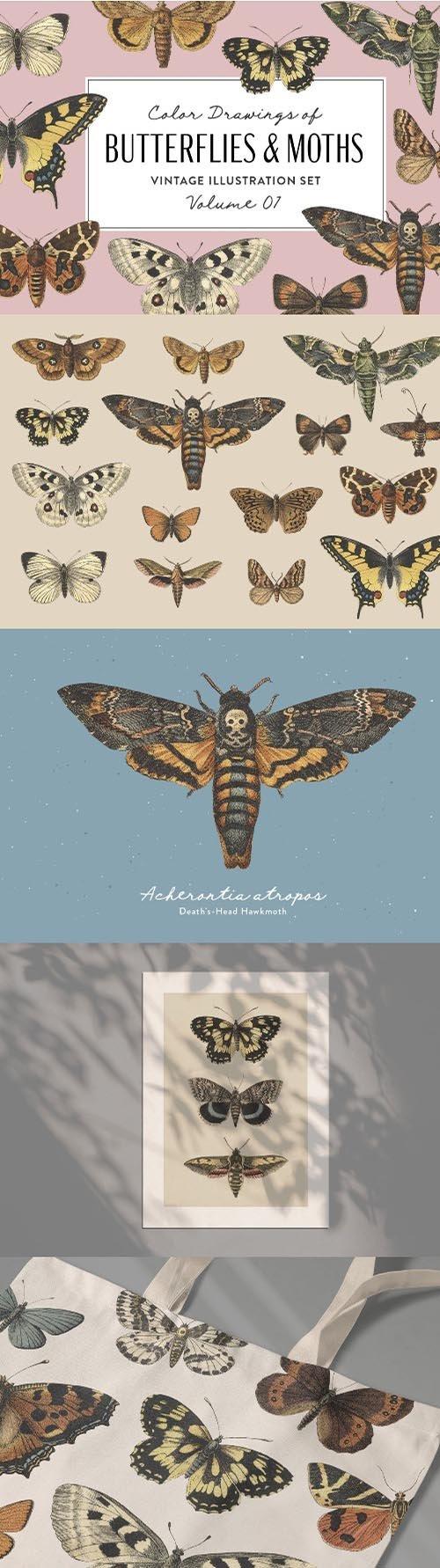 Butterflies & Moths Vintage Graphics Vol. 1 PNG
