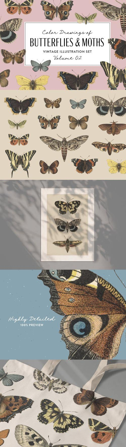 Butterflies & Moths Vintage Graphics Vol. 2 PNG