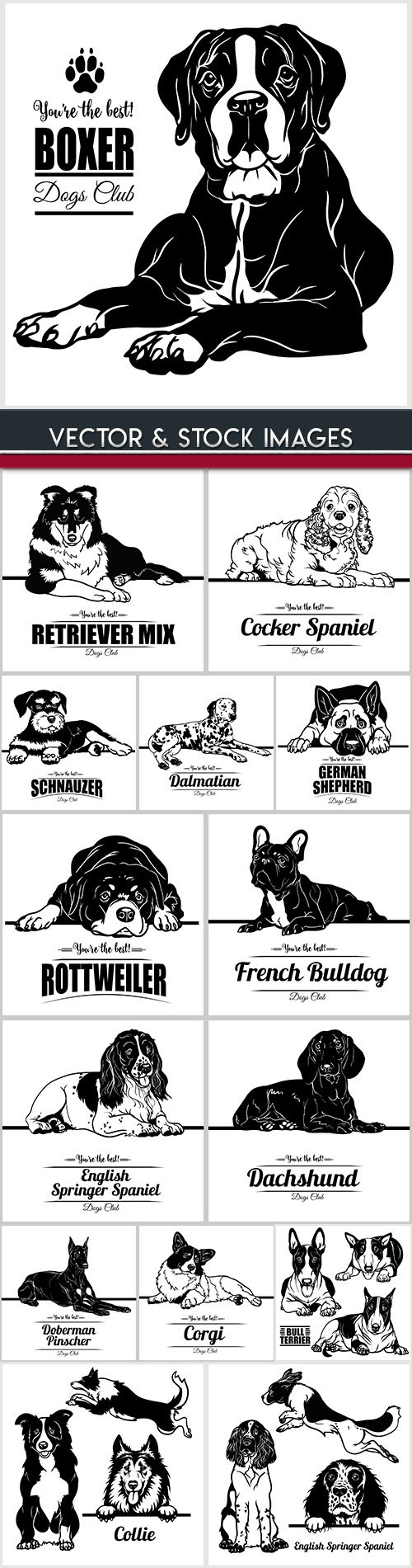 Dog breeds drawn illustrations collection