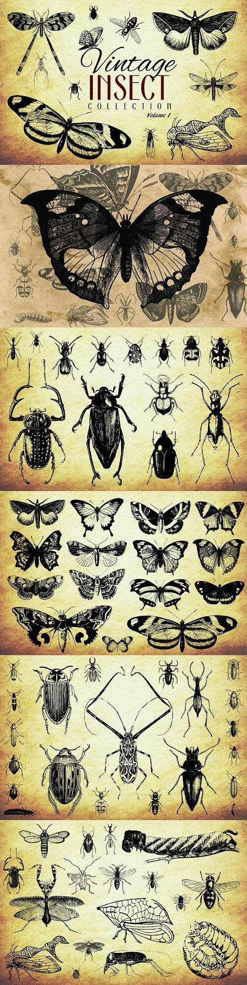 CM - 200 Vintage Insect Vector Collection - Vol.1