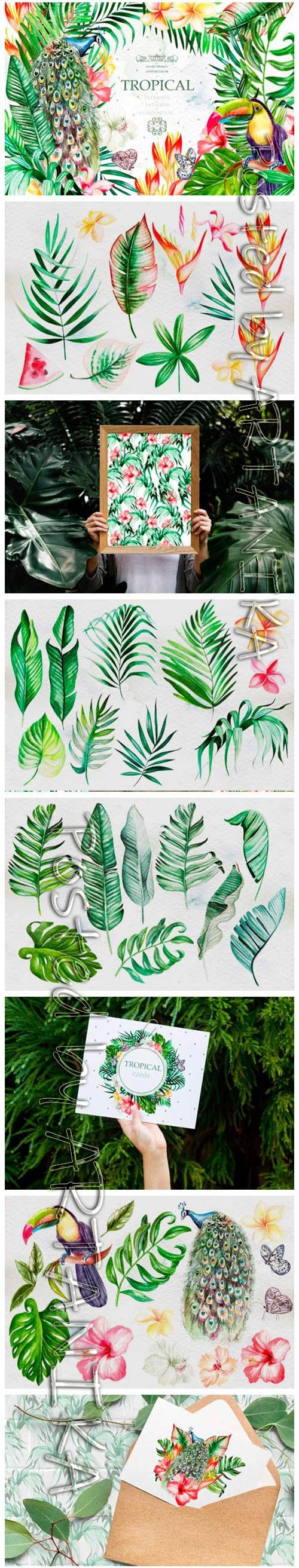 Hand Drawn Watercolor Tropic 4 2153776