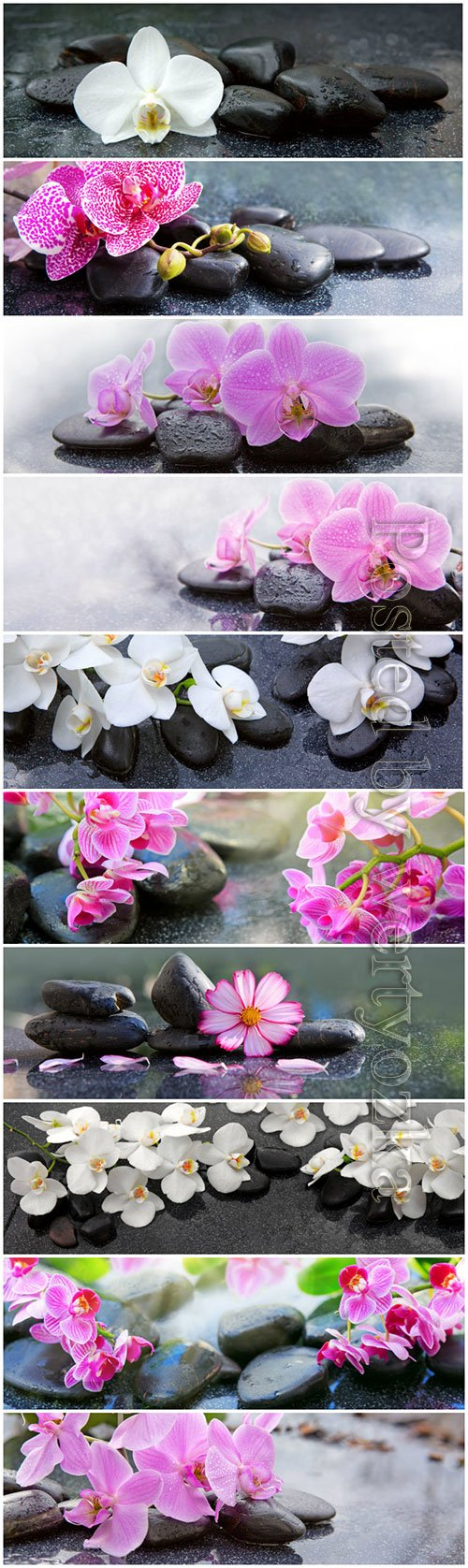 Orchids flowers and spa stones