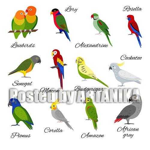 Vector set of Beautiful Parrot