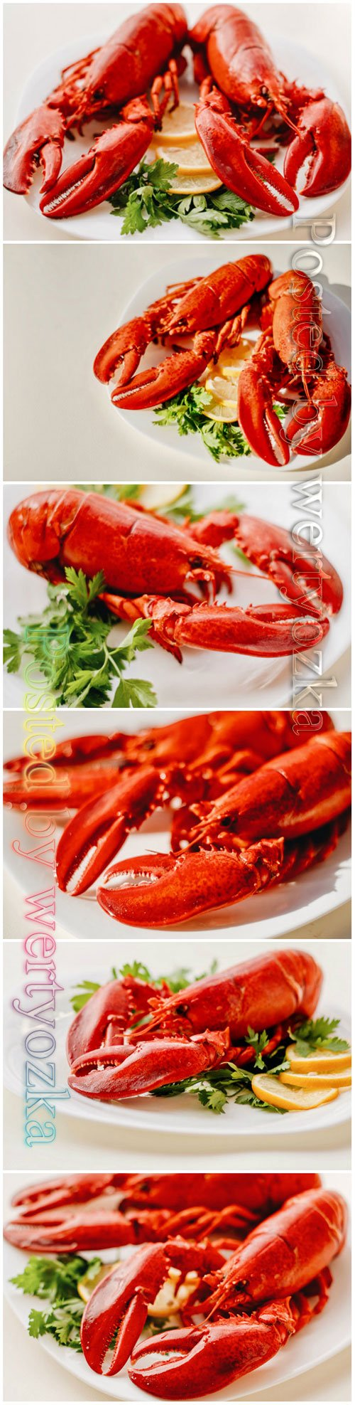 Seafood lobster beautiful stock photo