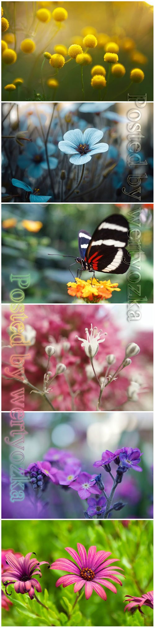 Flowers and butterflies beautiful stock photo