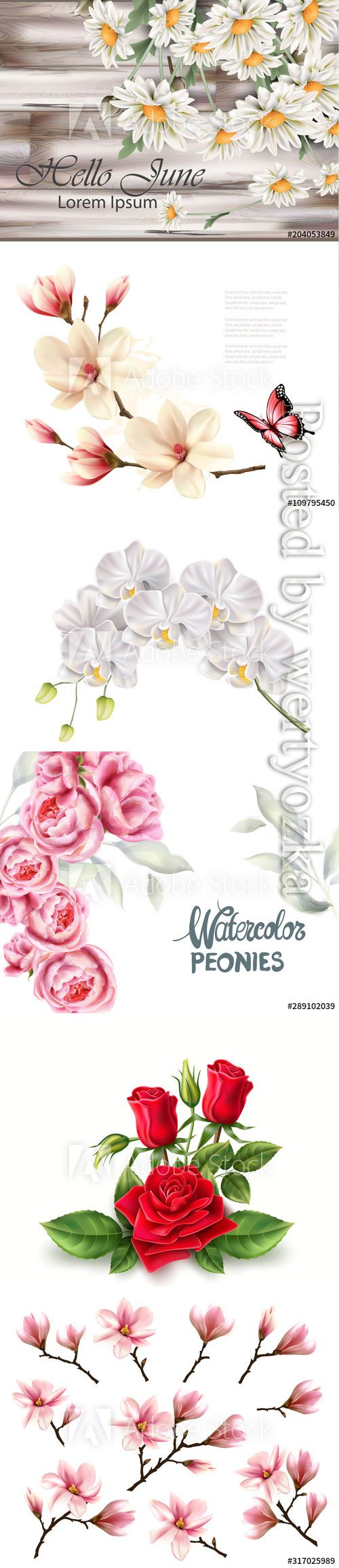 Beautiful flowers, daisies, roses, orchids, vector backgrounds
