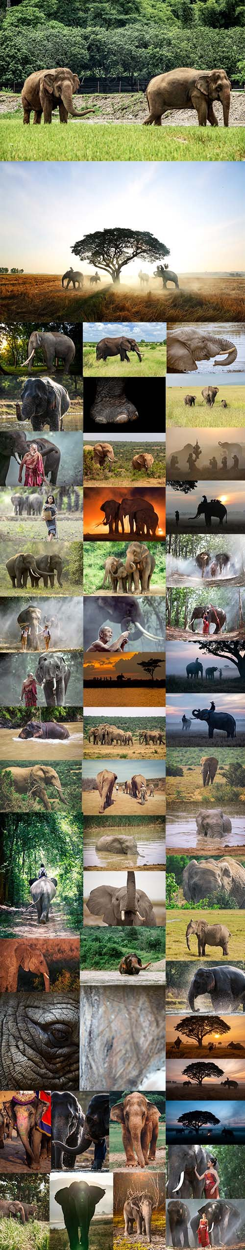 African Elephant - UHQ JPEG Stock Photo Bundle