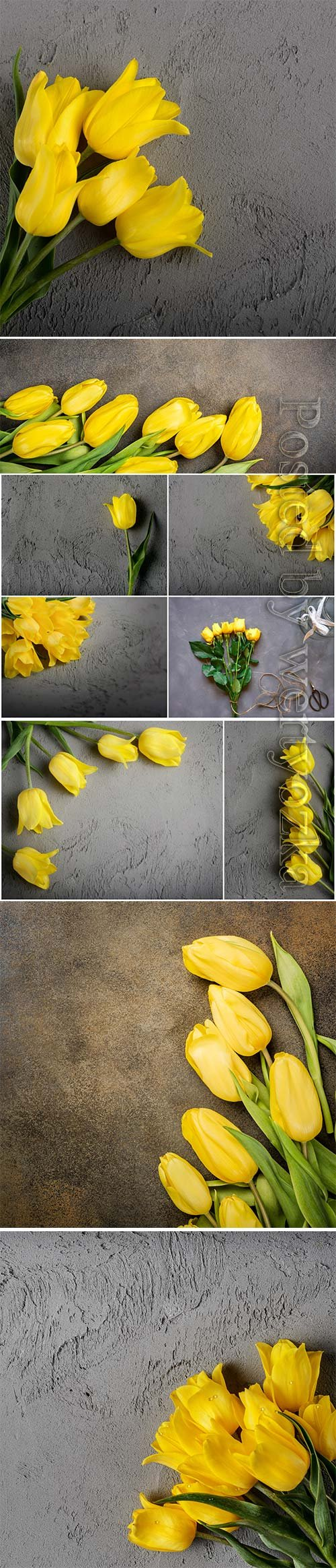 Beautiful yellow tulips stock photo