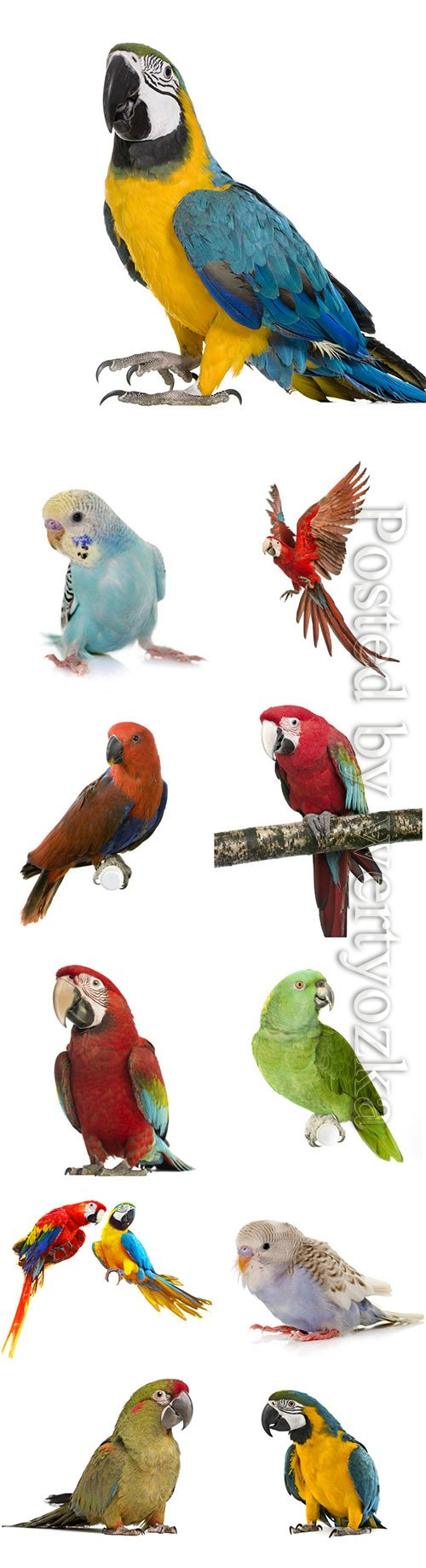 Parrots beautiful stock photo
