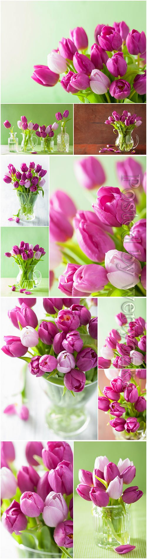 Tulips, spring flowers beautiful stock photo
