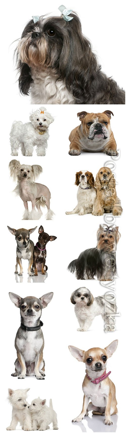 Dogs of different breeds beautiful stock photo
