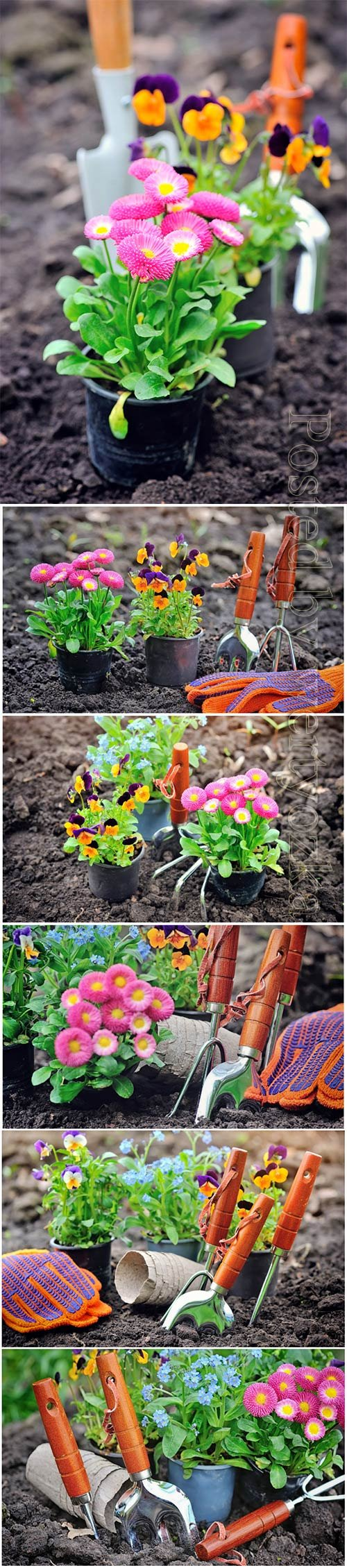 Gardening, flower planting beautiful stock photo