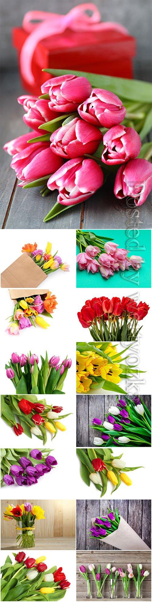 Colorful tulips beautiful stock photo
