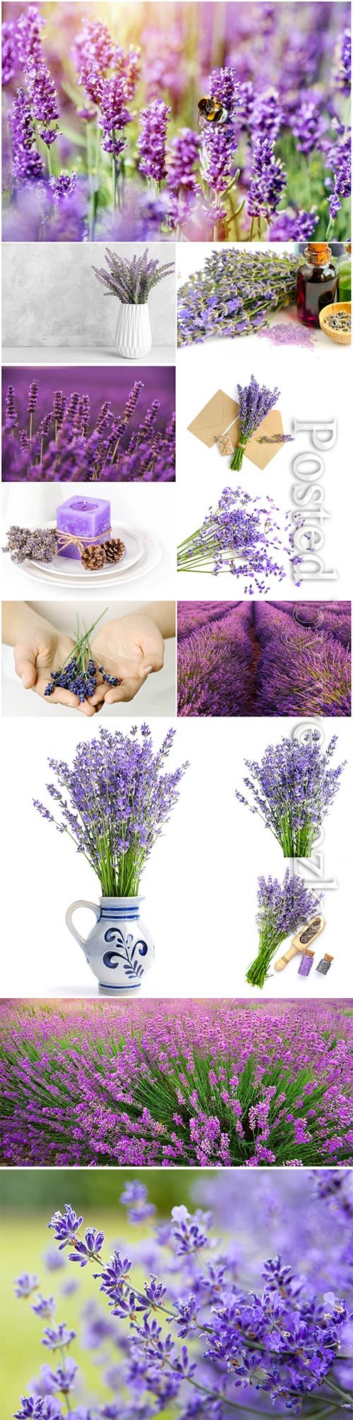 Beautiful lavender flowers