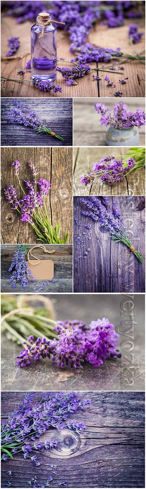 Fresh lavender flowers beautiful stock photo
