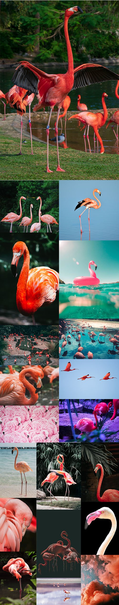 Flamingo - Premium UHQ Stock Photo Bundle