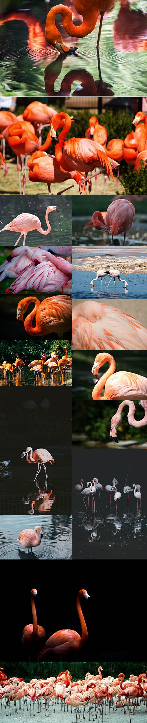Flamingo Bundle - UHQ Stock Photo Vol 2