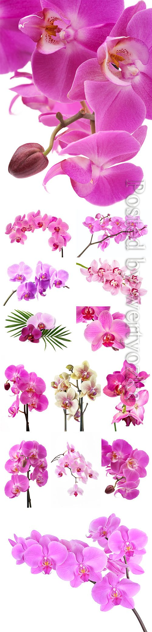 Beautiful orchids stock photo