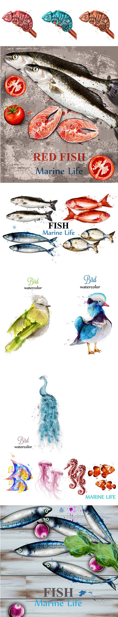 Watercolor Colorful Fish and Bird Set
