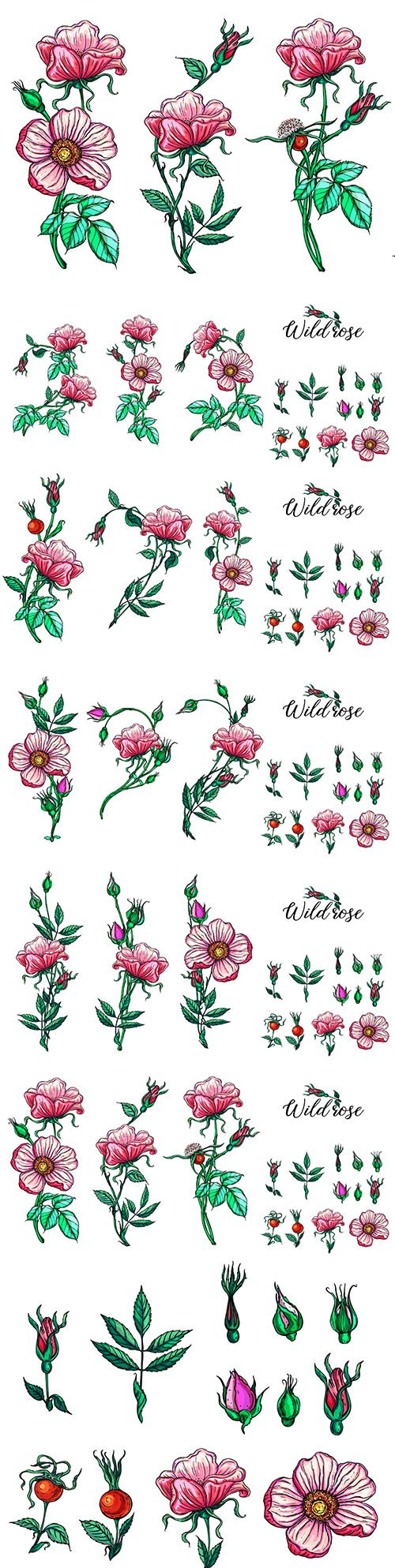 Pink roses and buds set floral compositions design