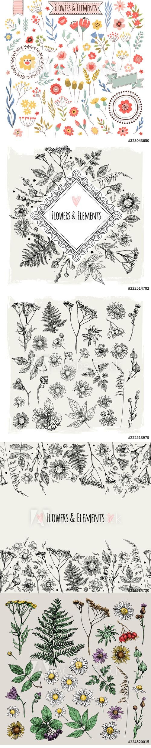 Vector Set of illustrations of plants and flowers
