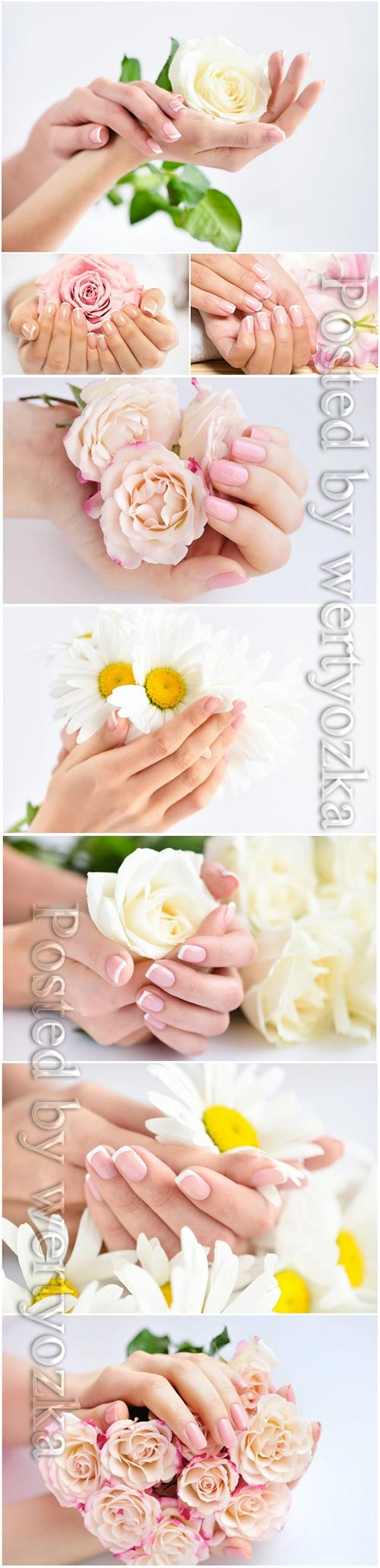 Beautiful manicure. female hands with flowers stock photo