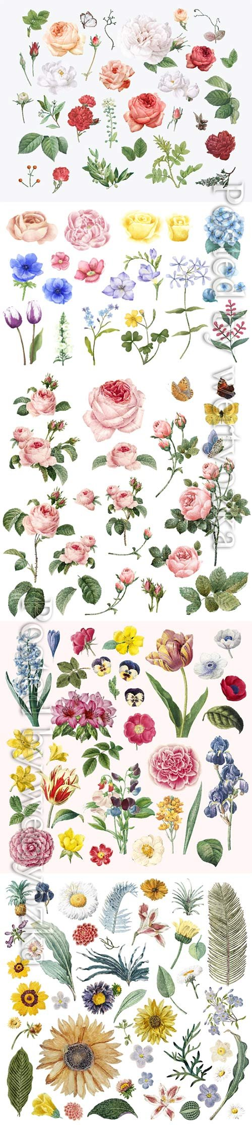 Set of beautiful blooming vector flowers