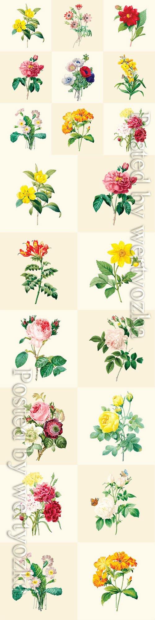 Beautiful blooming flowers in vector