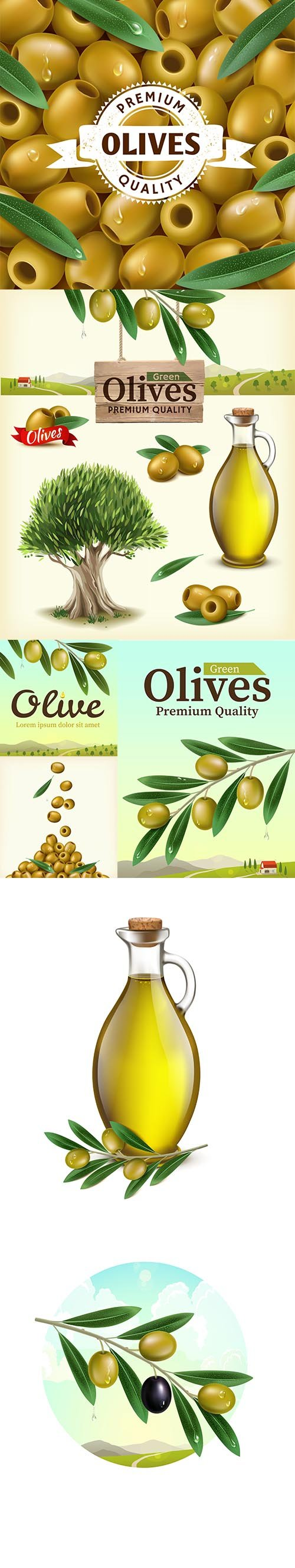 Realistic illustration of fruit olive plantations