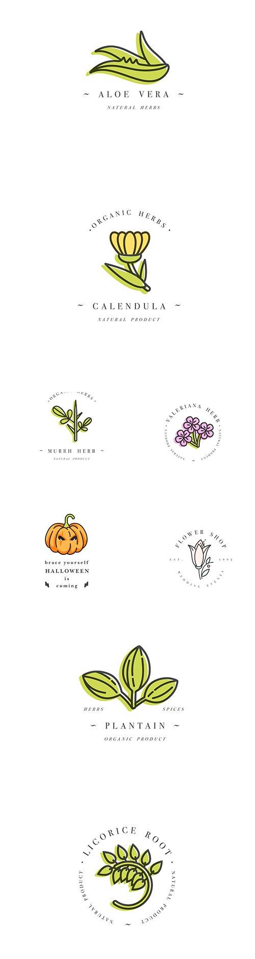 Colorful Logo Template Set