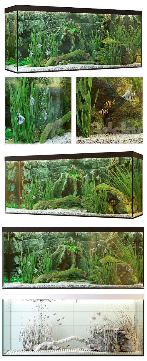 Aquarium 3D Models