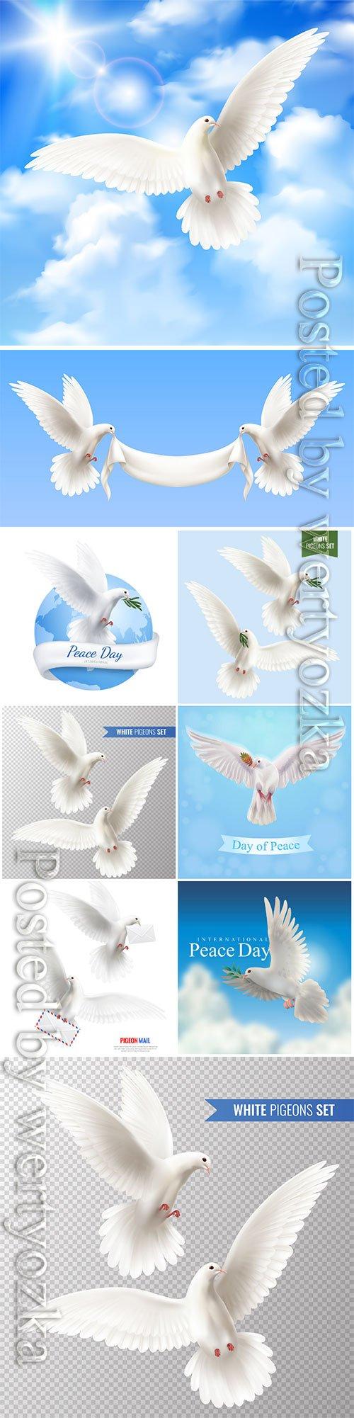 White pigeons vector set