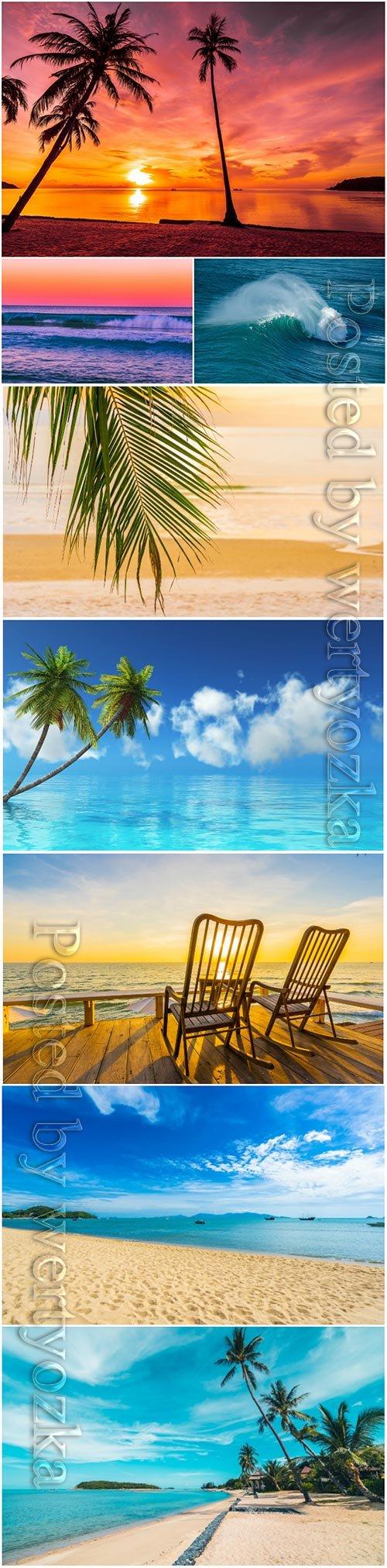 Beautiful tropical beach sea, palm tree