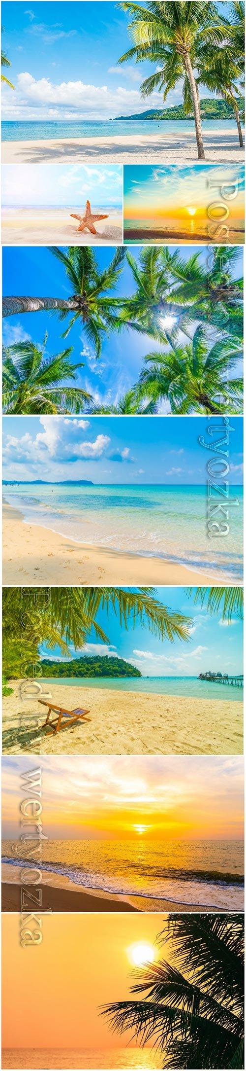 Beautiful tropical beach, palm tree, sunset at sea